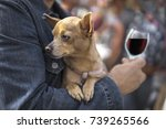 Stock photo a man with a little dog and a glass of wine 739265566