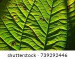 leaf pattern | Shutterstock . vector #739292446