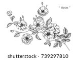 rose flowers drawing with line... | Shutterstock .eps vector #739297810