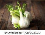 fresh fennel bulb | Shutterstock . vector #739302130