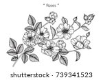 rose flowers drawing with line... | Shutterstock .eps vector #739341523