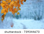 yellow autumn leaves in winter... | Shutterstock . vector #739344673