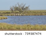 birds in the salt marshes and... | Shutterstock . vector #739387474