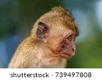 young monkey looking sideways.... | Shutterstock . vector #739497808