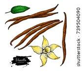 vanilla flower and bean stick... | Shutterstock .eps vector #739504090