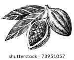cacao beans | Shutterstock . vector #73951057