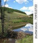 Beaver Dam And Reflecting Pond...