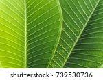 blur patterns of green leaf | Shutterstock . vector #739530736
