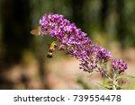 hummingbird suckling on a flower | Shutterstock . vector #739554478