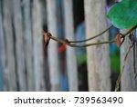 leaf spring | Shutterstock . vector #739563490