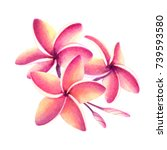 tropical pink and yellow... | Shutterstock . vector #739593580