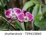 image of beautiful purple... | Shutterstock . vector #739613860