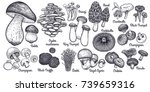 mushrooms. bolete  morel ... | Shutterstock .eps vector #739659316