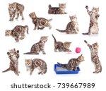Stock photo cats isolated set 739667989