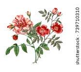 red rose flower. isolated on... | Shutterstock . vector #739710310