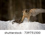 goshawk with prey | Shutterstock . vector #739751500