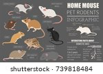 mice breeds icon set flat style ... | Shutterstock .eps vector #739818484