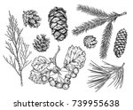 Set Of Different Branches  And...