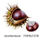 watercolor botanical... | Shutterstock . vector #739967278