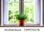 flowers at an old window - photo - stock photo