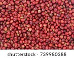Red Coffee Beans Ripening In...