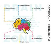 brain zones scheme. colorful... | Shutterstock . vector #740006230