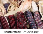 Colored Corn Close Up In The...
