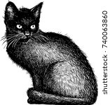 Stock vector sketch of a black kitten 740063860