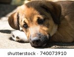a small brown puppy lying on... | Shutterstock . vector #740073910