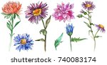 wildflower chrysantemum flower...   Shutterstock . vector #740083174