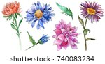wildflower chrysantemum flower... | Shutterstock . vector #740083234