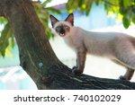 cat on the tree   Shutterstock . vector #740102029