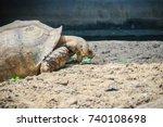 giant african spurred tortoise  ... | Shutterstock . vector #740108698