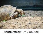 giant african spurred tortoise  ... | Shutterstock . vector #740108728