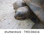 giant tortoise aldabra portrait.... | Shutterstock . vector #740136616