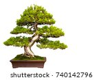 A Small Bonsai Tree In A...