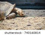 giant african spurred tortoise  ... | Shutterstock . vector #740160814
