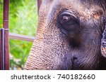 Small photo of Old and skinny elephant is chained and look very pitiful.