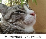 Small photo of Close up head of cat striped brown and white selective focus. Fat cat drowse