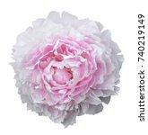 summer flowers  beautiful big...   Shutterstock . vector #740219149