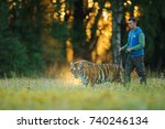 amur tiger in human care on a... | Shutterstock . vector #740246134