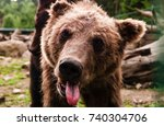 a brown bear in nature | Shutterstock . vector #740304706