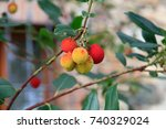 Small photo of Italy. Tuscany, Chianti, Panzano. Arbutus, flowering plants in the family Ericaceae. Arbute berries growing on the strawberry tree.