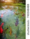japanese variegated carps... | Shutterstock . vector #740348488