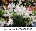 christmas cactus | Shutterstock . vector #740381368