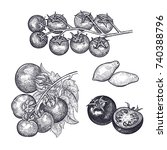 tomatoes set. hand drawing of... | Shutterstock .eps vector #740388796