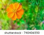 orange cosmos sulphureus plant... | Shutterstock . vector #740406550