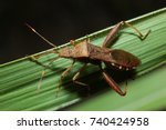 stinkbug on the leaf | Shutterstock . vector #740424958