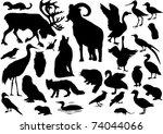 illustration with polar animals ...   Shutterstock .eps vector #74044066