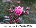 winter in the garden. hoarfrost ... | Shutterstock . vector #740462704